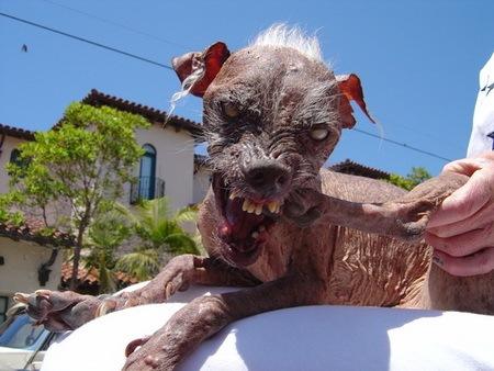Самая страшная собака
