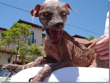 uglydog_003