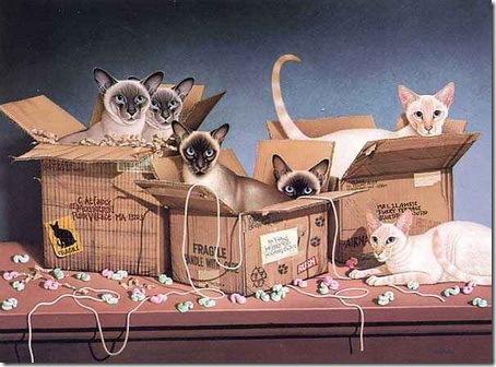 Кошки Braldt Bralds