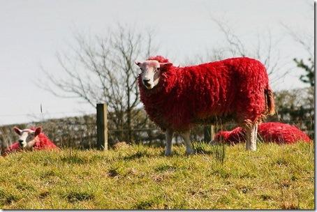 Красные овцы