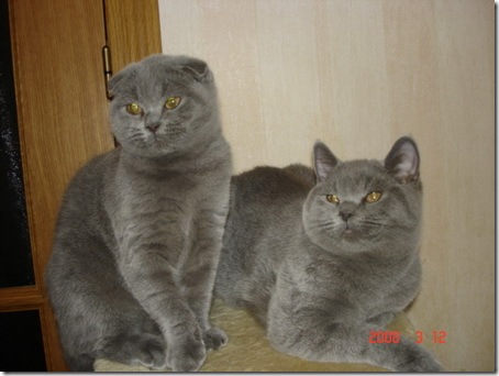 Улыбающиеся кошки