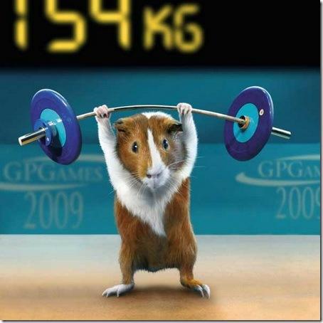 Морские свинки на Олимпиаде