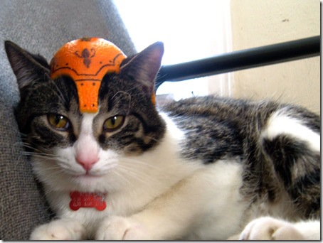 Шлем для кошки