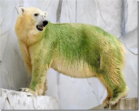 Зеленые белые медведи