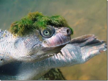 Модная черепаха