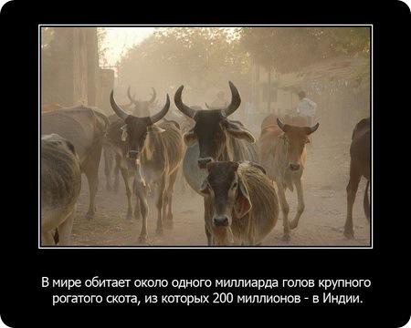 Факты о животных