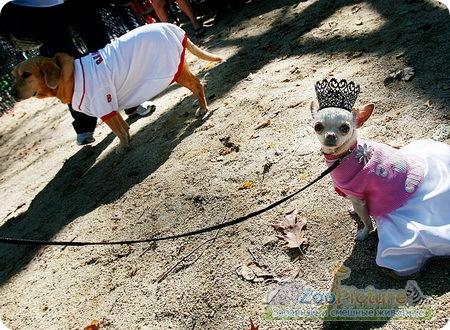 собачьи костюмы