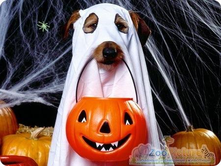 Собаки halloween