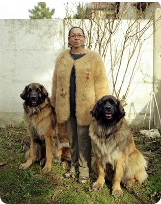Dogwool