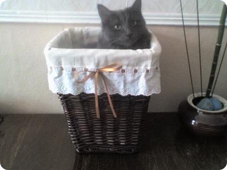 Засланное - Кошки