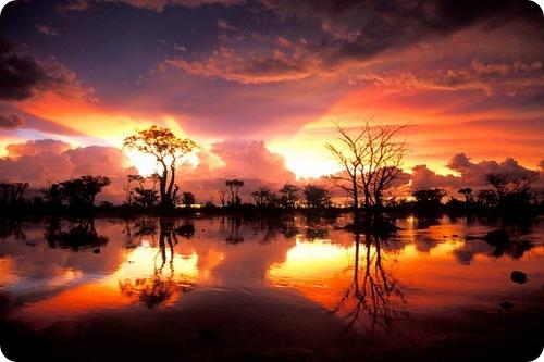 Национальный парк Этоша в Намибии.