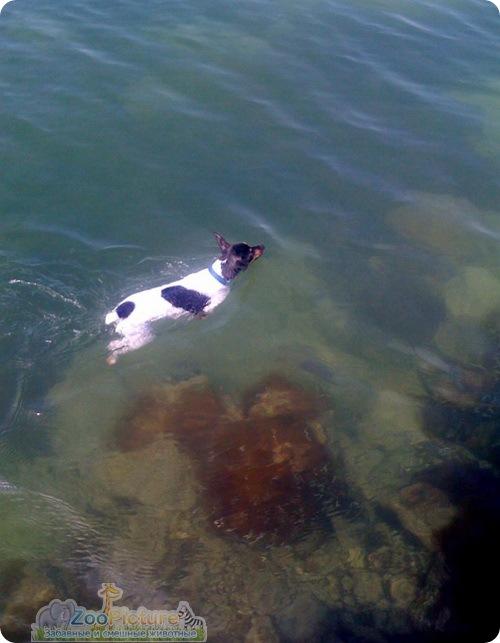 Спасение терьера из пасти акулы