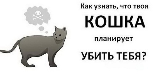 Как узнать, что твоя кошка хочет тебя убить