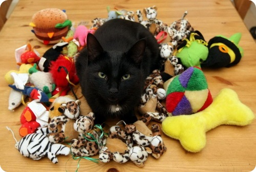 Коты-воришки: Фрэнки