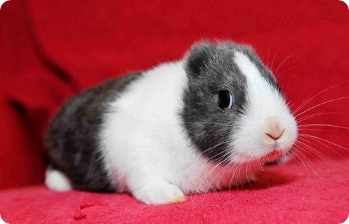 Кролик Винсент