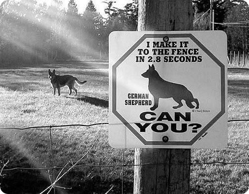 Осторожно ! Быстрая собака