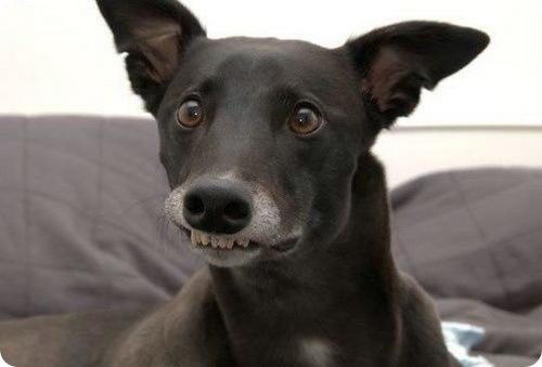 Собачьи улыбки