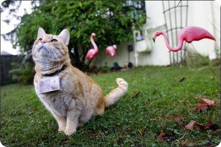 Документальный фильм снимает Кот