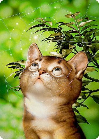 Кошки Makoto Muramatsu