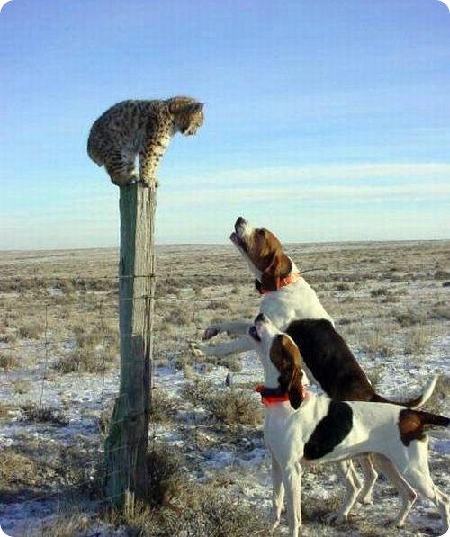 Как кошка с собакой - Подборка