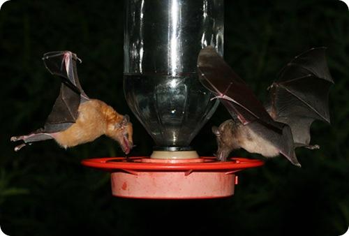 Ночные любители нектара
