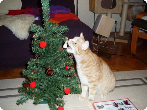 Новогодние кошки
