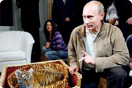 Куда Путин поселил своего тигренка ?