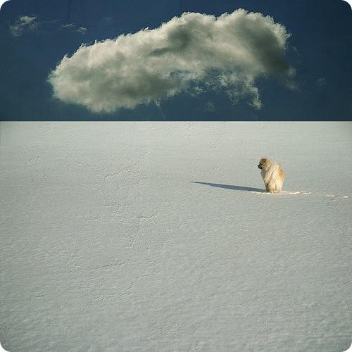 Человек, потерявший собаку, пережил кошмар на льду