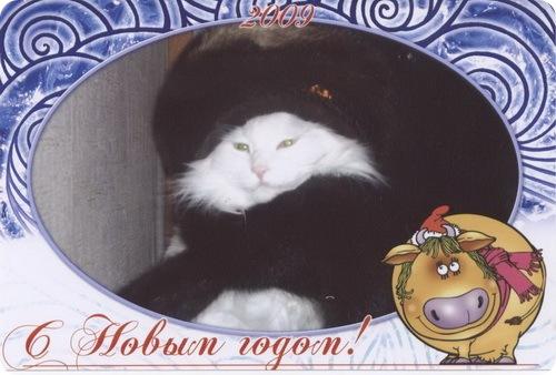 открытка от Ольги