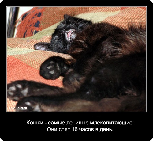Интересные факты о кошках