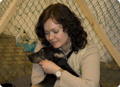 Выставка бездомных животных
