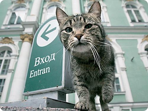В Питере открылся музей кошки