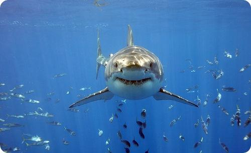 Акулий супчик: реальная цена деликатеса