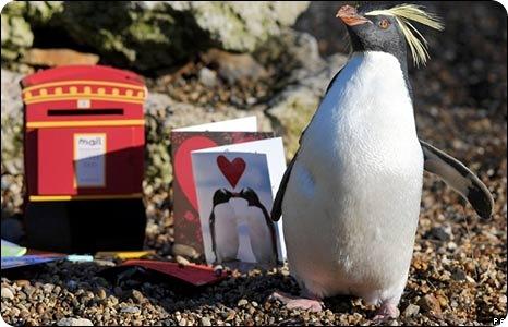 Валентинка для пингвина Рокси