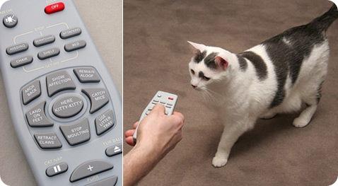 Пульт ДУ для кошек