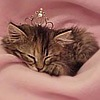 аватары кошек
