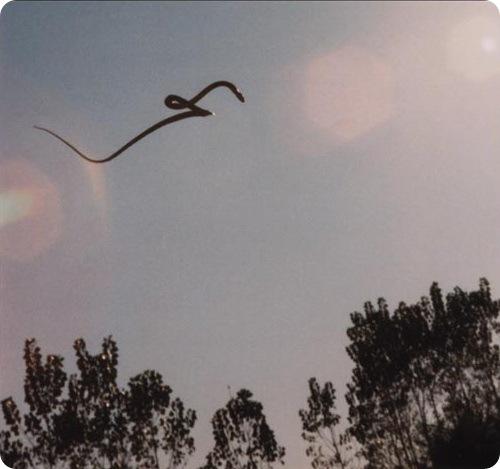 Летающие змеи