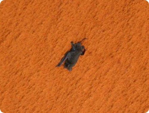 Летучая мышь - космонавт
