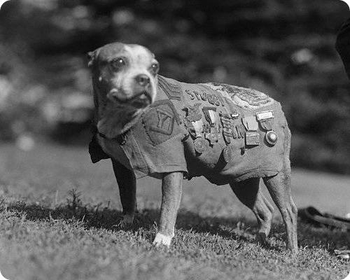 Сержант Stubby