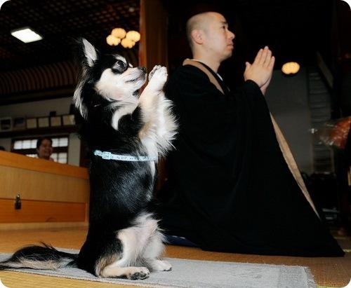 Собака монах