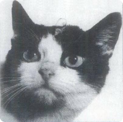 Кошки-космонавты