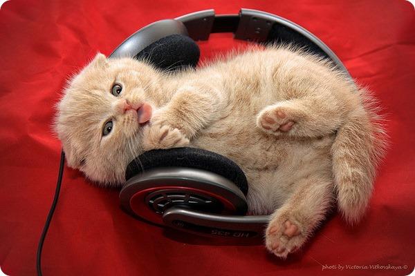 Песни о кошках