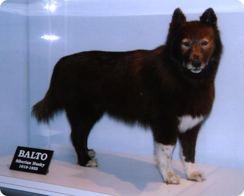 Балто