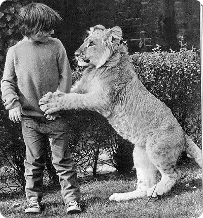 http://www.zoopicture.ru/assets/2009/04/christian-lion-07.jpg