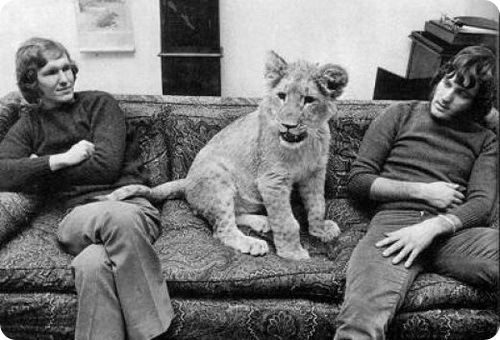 http://www.zoopicture.ru/assets/2009/04/christian-lion-4.jpg