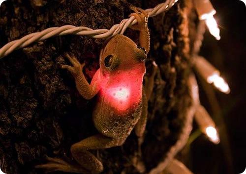 Лягушка и лампочку от рождественской гирлянды