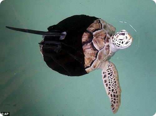 Гидрокостюм для черепахи