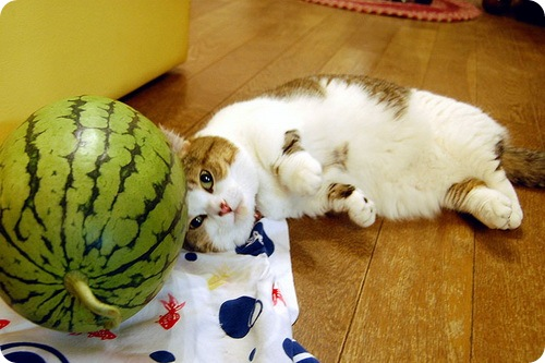 Кошки и Арбузы