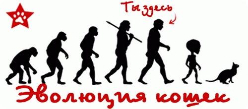 Эволюция Кошек