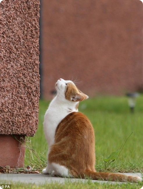 Чарли – кот скалолаз